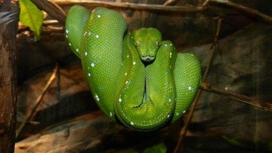 Bioparc Fuengirola: Green snake