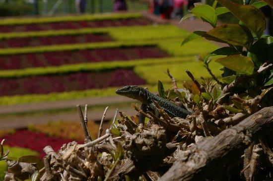 Madeira Botanical Garden : Botanical Gardens Madeira