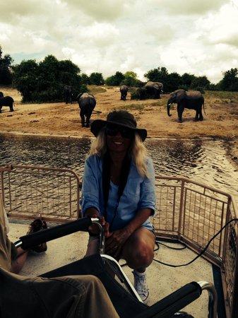 Chobe Game Lodge: Le bain des éléphants