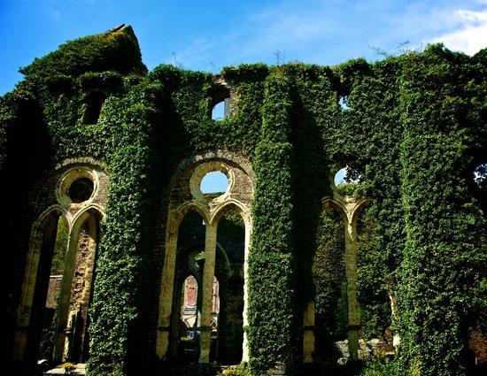 Abbaye de Villers: Yedra