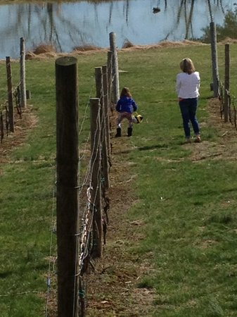 Crushed Cellars Winery: my daughter was hiding Easter eggs in the vineyard