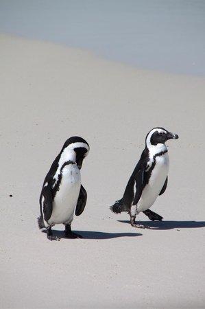 Boulders Beach: Funny penguins !