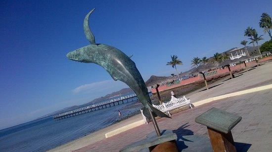 Whale Shark Boat Tours : La Pas