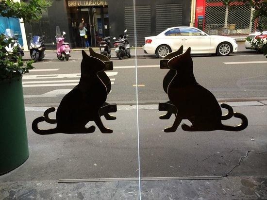 Hotel Monte Carlo: кошки везде