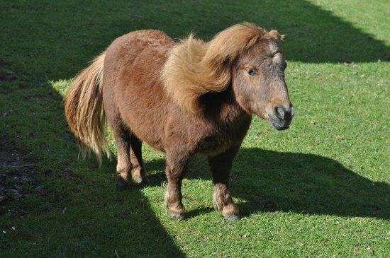 min magiska ponny
