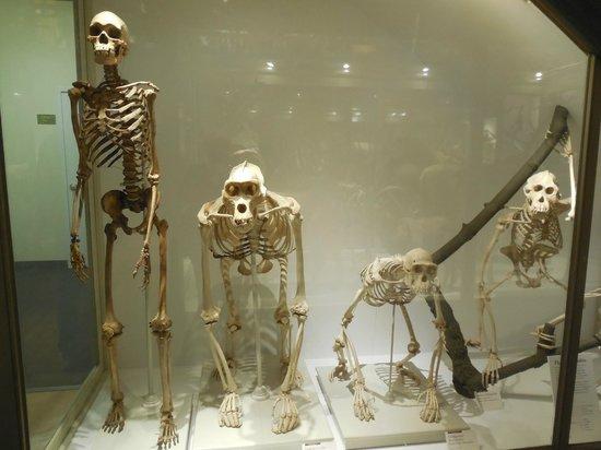 Harvard Museum of Natural History : Bones