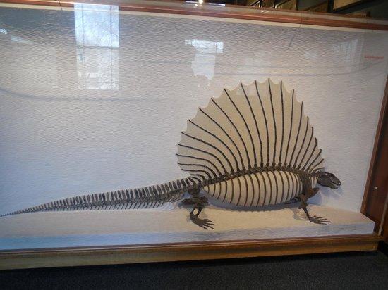 Harvard Museum of Natural History : Exhibit