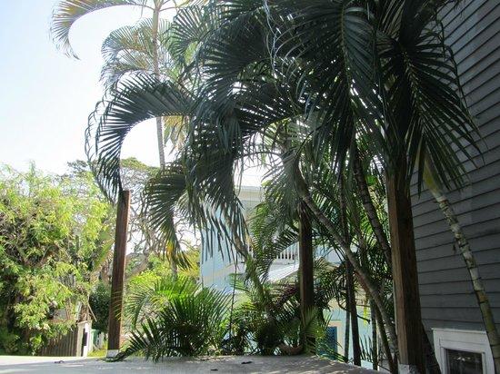 Ambrosia Key West Tropical Lodging: garden
