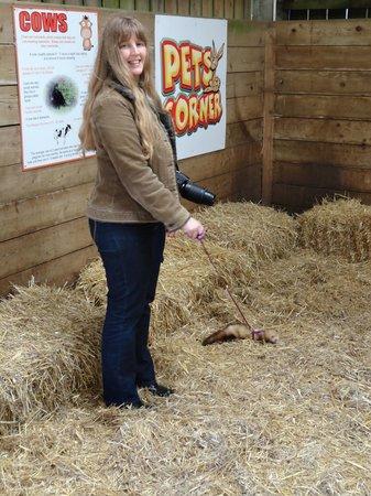 Prickly Ball Farm: Ferret walking