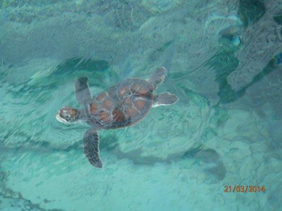 Angsana Ihuru : turtle nursery