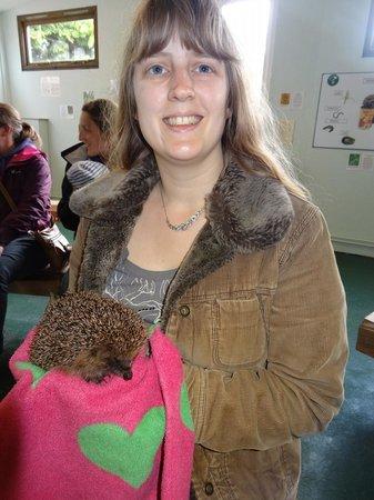 Prickly Ball Farm: Hedgehog