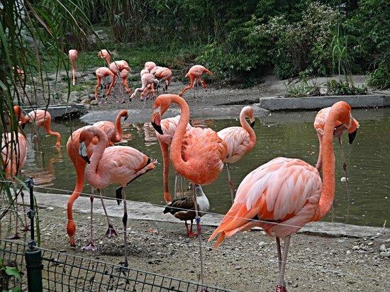 Zoo Ostrava
