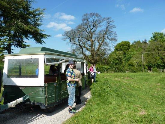 Denbies Wine Estate: the little train ride on the estate