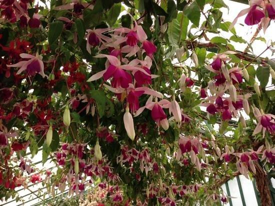 Serres Royales De Laeken : tolle Blütenpracht