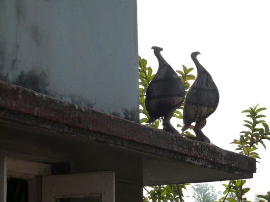 Nayana's Homestay: Peacocks on the roof