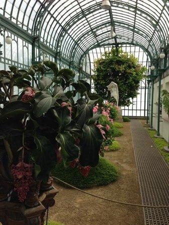 Serres Royales De Laeken : tropische Pflanzen