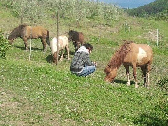 Ristorante della Fattoria Voltrona: cavalli