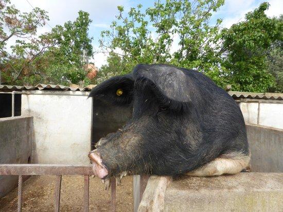 Agriturismo Marongiu: Stall