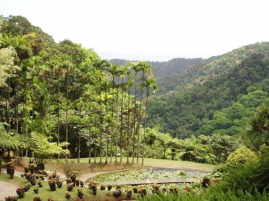 Jardín Balata: le jardin de Balata