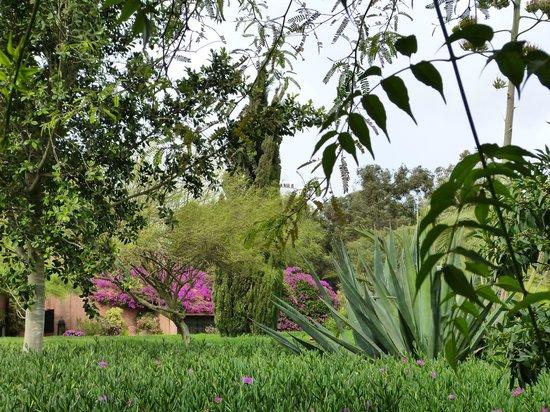 Riad Dar Maktoub : Jardins