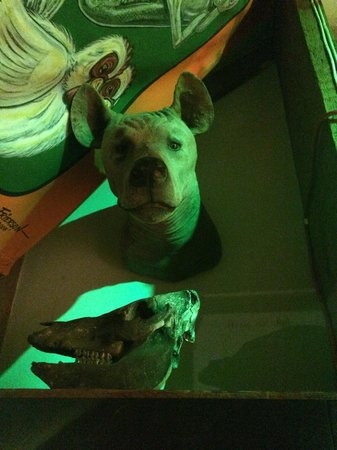 Museum of The Weird : This dog head was staring at us!!!
