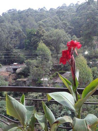 Las Palmas Munnar: View from the restaurant