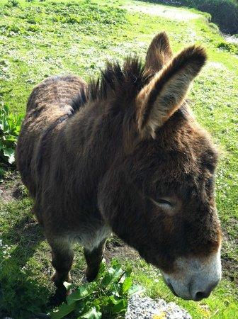 Doolin Cottage Bed & Breakfast : Donkey neighbor