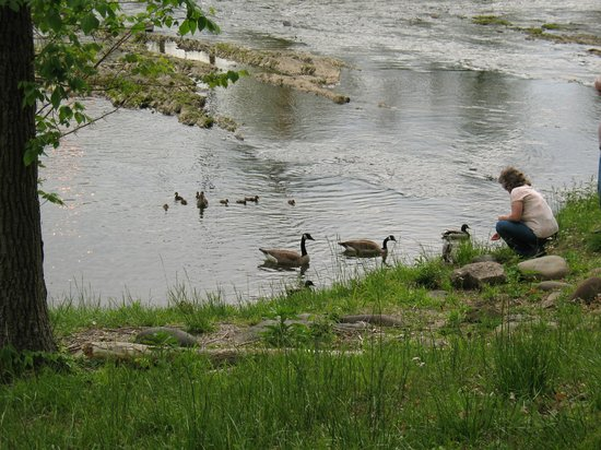 RiverStone Resort & Spa : Stream in front of the hotel with guests feeding the baby ducks