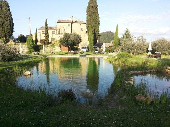 Agriturismo Podere San Lorenzo: Piscina