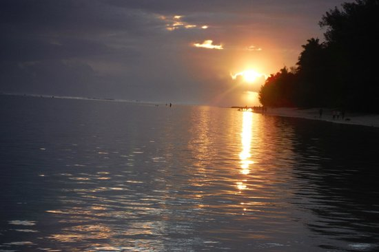 Palm Grove: sunset