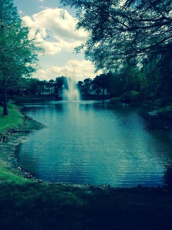 Sheraton Vistana Resort - Lake Buena Vista : One if the lakes that we looked out onto