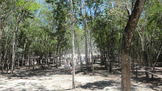 Ruinas de Coba: VISTA DE PIRAMIDE PRIMCIPAL