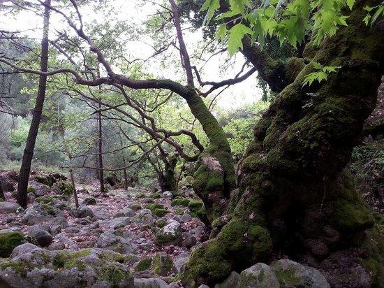 Καλλονή, Ελλάδα: Waterfall of Klapados