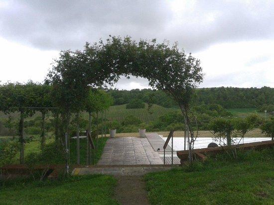 Agriturismo La Piantata : vista della casa sull'albero dalla piscina