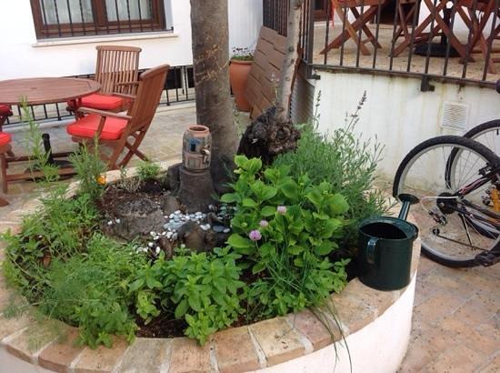 Posada de Quijada: Herb garden on the patio