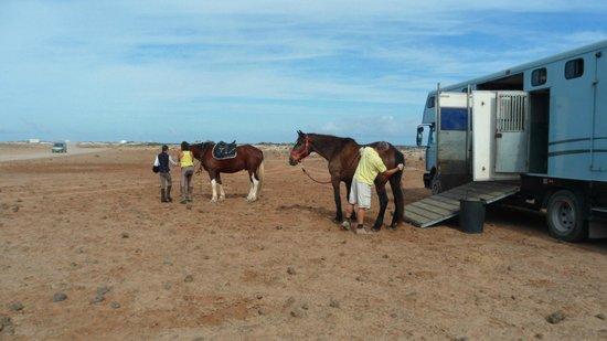 Finca Julie Horse Riding: Preparing for the Coastal Ride