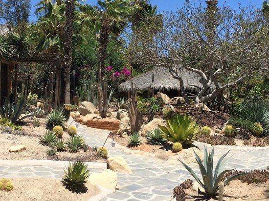 Los Adobes de Todos Santos: cactus cout yard