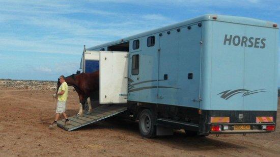 Finca Julie Horse Riding: Unloading.