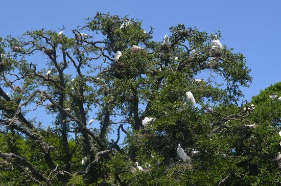 St. Augustine Alligator Farm Zoological Park : Spectacular bird viewing