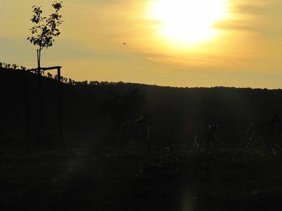 Agriturismo La Svolta : Tramonto