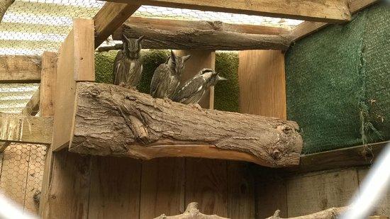 Small Breeds Farm Park and Owl Centre: owl centre
