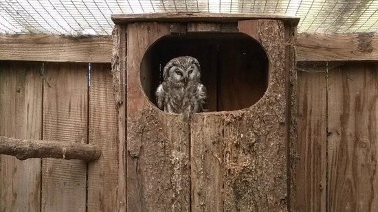 Small Breeds Farm Park and Owl Centre: Owl