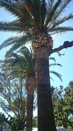 Playa Montroig Camping Resort: Excelente