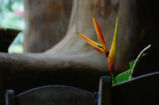 Ecoaldea Kapievi: Flower in the new dining area