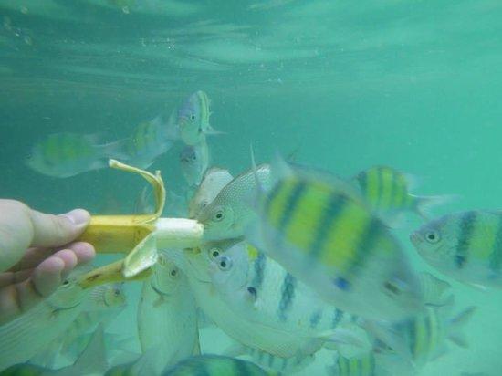 Phuket Sail Tours: Amazing snorkeling at Paradise Beach