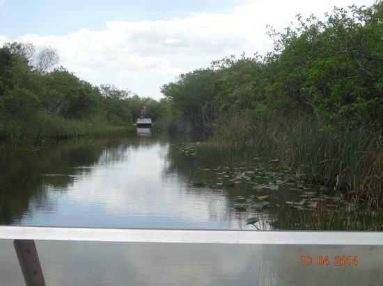 Gator Park: Caminho percorrido pelo airboat
