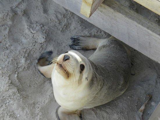 Kangaroo Island Odysseys : Under the walkway at Seal Bay