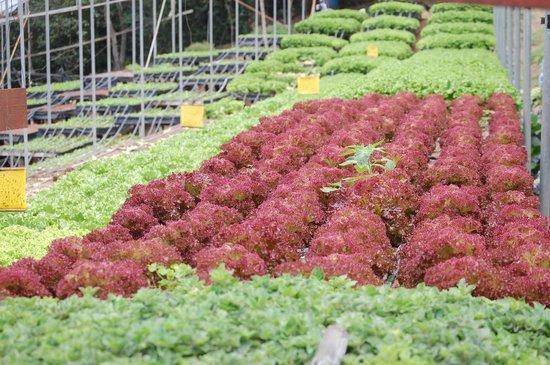 Los Pinos - Cabanas y Jardines: A view of the hydroponic garden