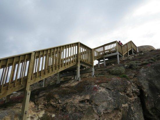 Kangaroo Island Odysseys: Down to Admirals Arch
