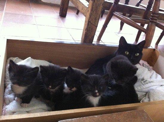 Higher Eggbeer Farm: Kittens